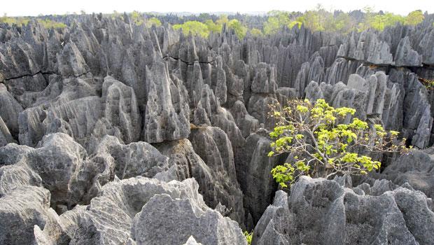 Partez à Madagascar